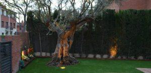 jardin-olivera
