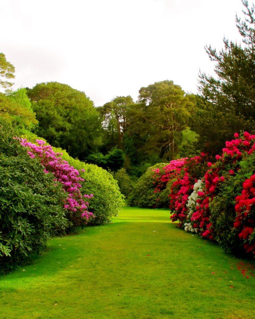 Plantas de jard n pon color en tu vida empresa de for Jardineria paisajista
