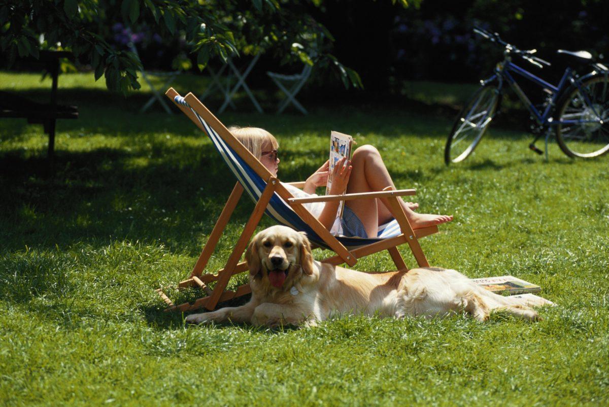 C sped artificial para mascotas empresa de jardiner a - Cesped artificial barcelona ...