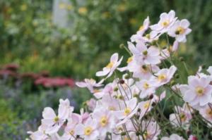 pequeño jardín en castelldefels